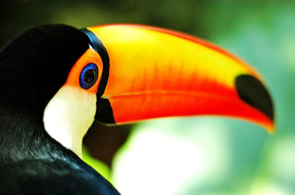 Toucans Shine Bright With Their Brightly Colored Bills ...